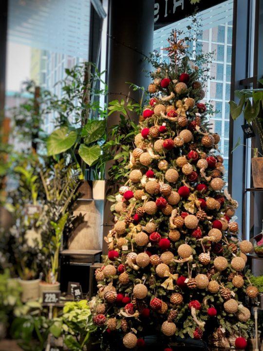 Juleblomster hos Floriss Byporten